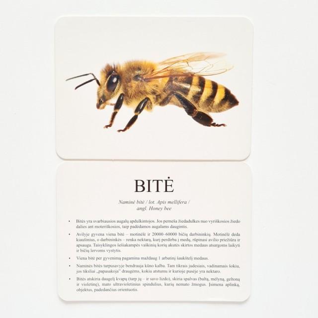 Vabzdžiai - Mokomosios kortelės